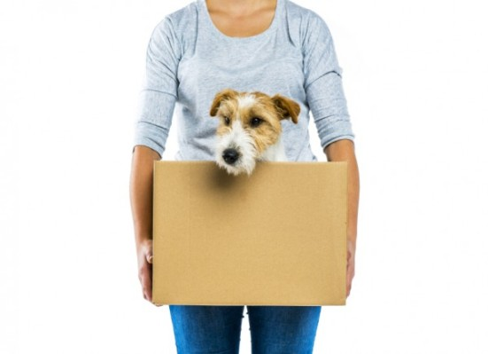 Make your move in Clevalnd or Columbus easier for your pets with these tips.